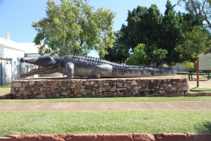 Crocodile - Normanton QLD